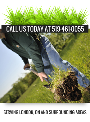 London ON Landscaping Contractor - Banner About
